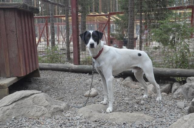 Питомник ездовых собак Кудама  фото 12
