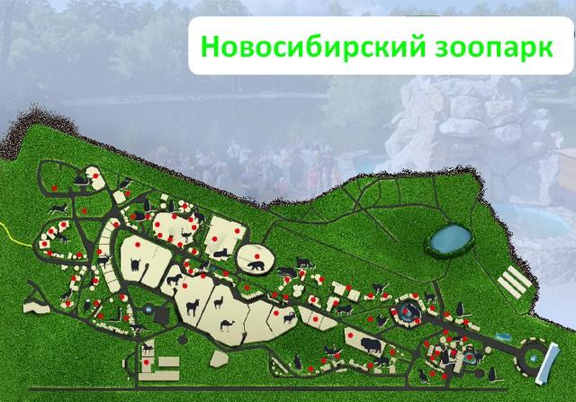 Карта зоопарка с животными